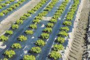 SOSTEGNO ALL'ATTIVITA' AGRICOLA PER SMALTIMENTO RIFIUTI SPECIALI